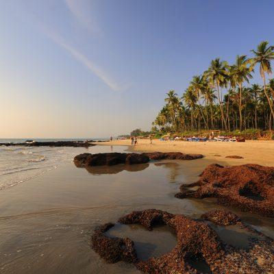 Morjim Beach,, Goa - Banyan Tree - Yoga on a Shoestring