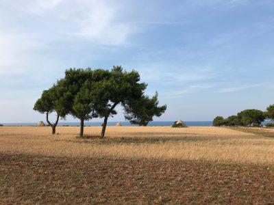 Masseria della Zingara, Puglia - YOAS holiday